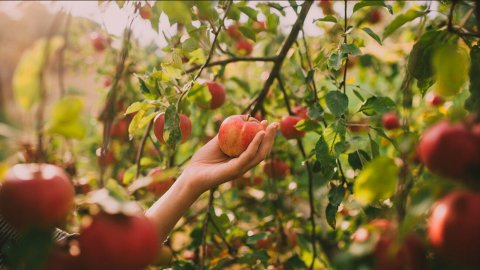 5 Life Lessons From Picking Apples
